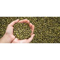 café verde orgánico, producto adelgazante (100% natural)